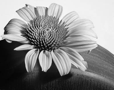 Photograph - Monochrome Coneflower by David and Carol Kelly