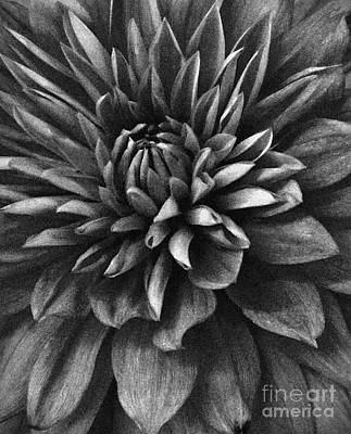 Mixed Media - Monochrome Dahlia by Chalet Roome-Rigdon