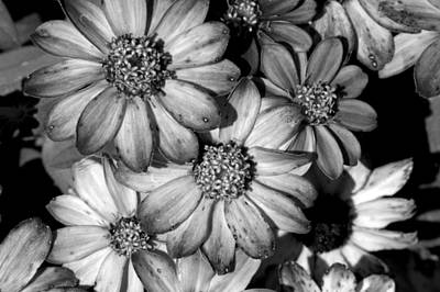Photograph - Monochrome Flowers by David Weeks