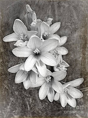 Digital Art - Monochrome Freesia Canvas Grunge by Kaye Menner