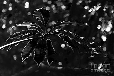 Monochrome Leaf  Art Print
