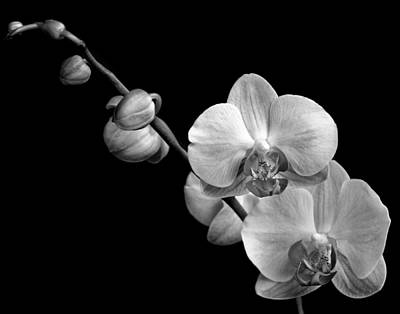 Photograph - Monochrome Orchid by David and Carol Kelly