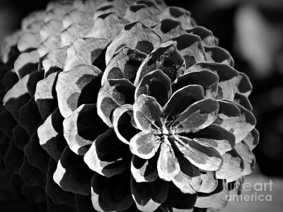 Photograph - Monochrome Pine Cone by Chalet Roome-Rigdon