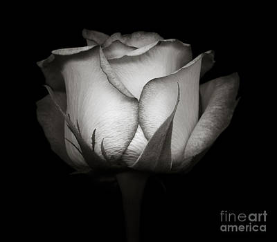 Rose Photograph - Monochrome Rose by Oscar Gutierrez