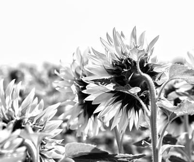 Monochrome Summer Art Print by Georgia Fowler