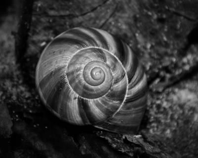 Photograph - Monochrome Swirl by Mary Zeman