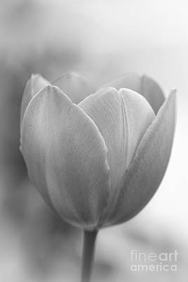 Photograph - Monochrome Tulip by Clare Bambers