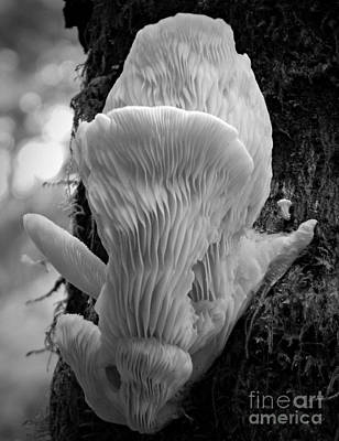 Photograph - Monochrome White Fungus by Chalet Roome-Rigdon