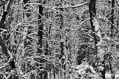 Photograph - Monochrome Winter Wilderness by Dan Sproul
