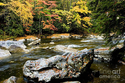 Monongahela National Forest Cranberry River Art Print by Thomas R Fletcher