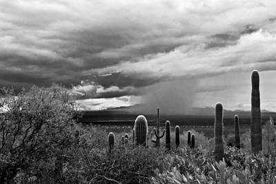 Photograph - Monsoon by Carol Erikson