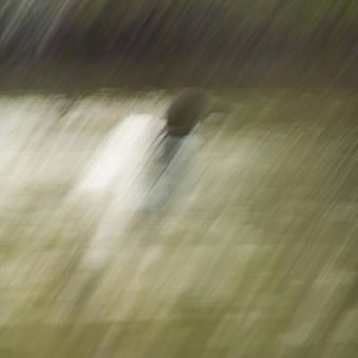 Loon Digital Art - Monsoon Loon by Daniel Hebard