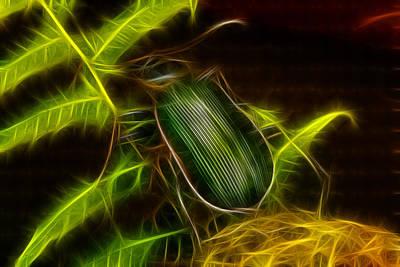 Monster Carabid Beetle Print by Douglas Barnett