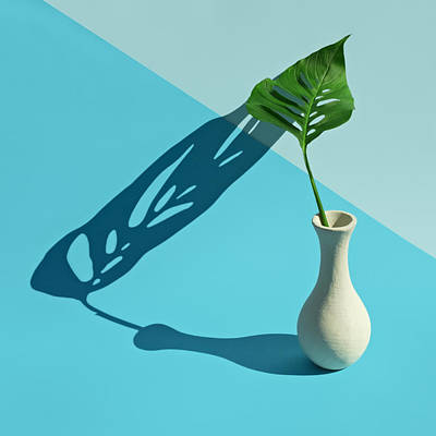 Photograph - Monstera Leaf In Vase With Strong Shadow by Juj Winn