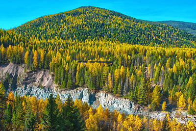 Photograph - Montana Aspens by Brenda Jacobs