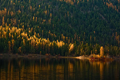 Wall Art - Photograph - Montana Gold by Diana Marcoux
