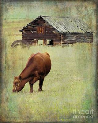 Red Angus Cow Photograph - Montana Grazer by Sharon Marcella Marston