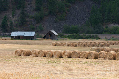 Photograph - Montana Hay Harvest by Vinnie Oakes