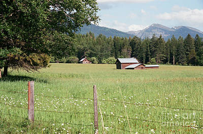 Photograph - Montana Homestead by Vinnie Oakes