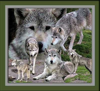 Montana Digital Art - Montana Wolf Pack by Thomas Woolworth