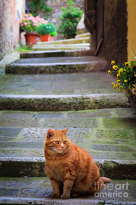 San Gimignano Photograph - Montepulciano Cat by Inge Johnsson