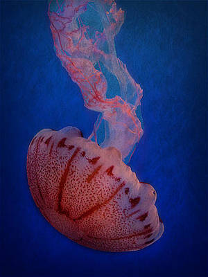 Photograph - Monterey Bay Jelly by Morgan Wright