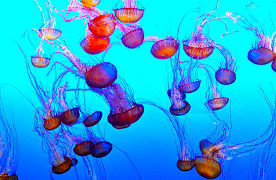 Fish Underwater Painting - Monterey Bay Jellyfish by Barbara Snyder
