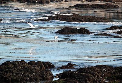 Great White Egrets Digital Art - Monterey Bay Scene by Suzanne Gaff