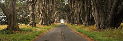 Vanishing America Photograph - Monterey Cypress Tree Tunnel by Panoramic Images