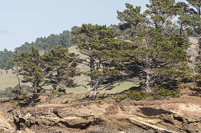 Photograph - Monterey Cypress Trees by Lee Kirchhevel