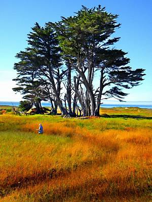 Photograph - Monterey Cyprus Grove by Frank Wilson