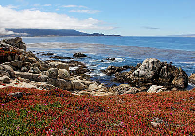 Photograph - Monterey by Judy Vincent