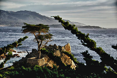 Photograph - Monterey Lone Cypress by Ron White