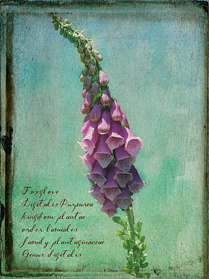 Photograph - Monticello Foxglove by Paulette B Wright