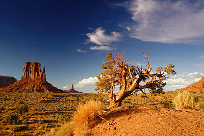 Northern Arizona Photograph - Monument Valley Lone Juniper And West Mitten. by Silvio Ligutti