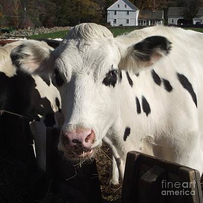 Photograph - Moo by Michelle Welles