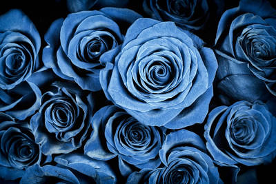 Moody Blue Rose Bouquet Art Print by Adam Romanowicz