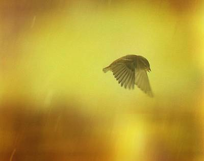 Starlings Digital Art - Little Bird On A Moody Flight by Gothicrow Images