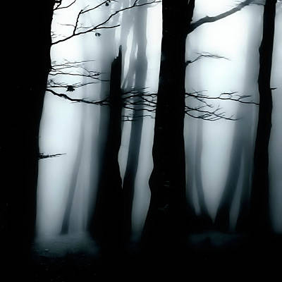 Photograph - Moody Forest by Martin Hardman