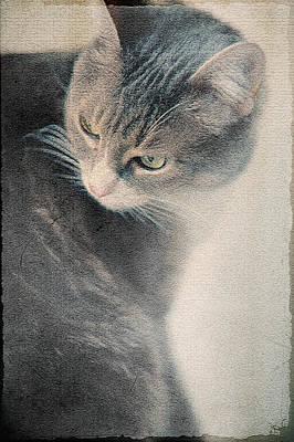 Photograph - Moody by Jenny Rainbow