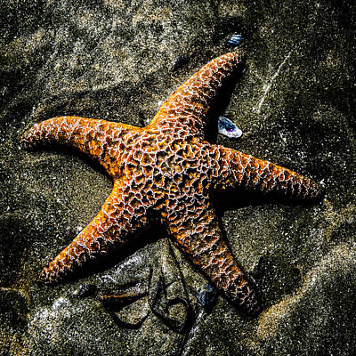 Photograph - Moody Starfish II by Roxy Hurtubise