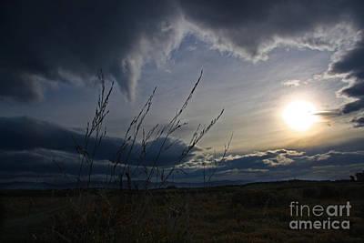 Photograph - Moody Sun With Grasses by Nareeta Martin