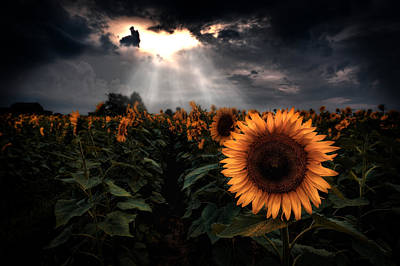 Moody Sunflower Field Art Print by Emmanuel Panagiotakis