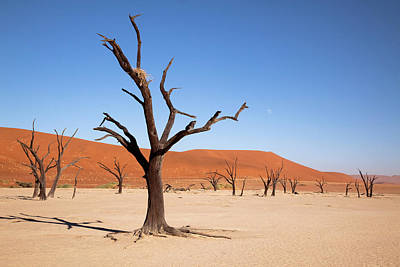 Bird Nest Photograph - Moon And Tree With Nest, Dead Vlei by Jaynes Gallery