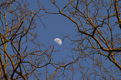 Photograph - Moon And Trees by Sharon Popek