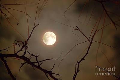 Moon Behind Branches Art Print by Deborah Smolinske