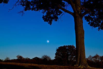 Photograph - Moon Behind The Tree by Jonny D