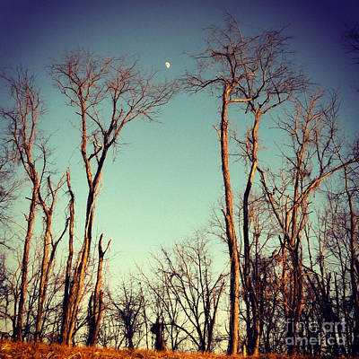 Print featuring the photograph Moon Between The Trees by Kerri Farley