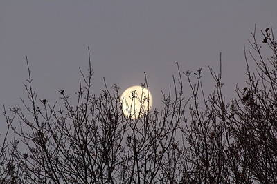 Photograph - Moon Fall by Denise Cicchella