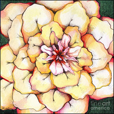 Moon Flower Out Of The Bloomers And Onto The Bloom Print by Shadia Derbyshire